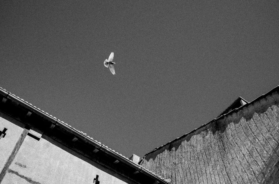 CONFINEMENT #pigeons